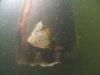 broken-skegg-in-water_1